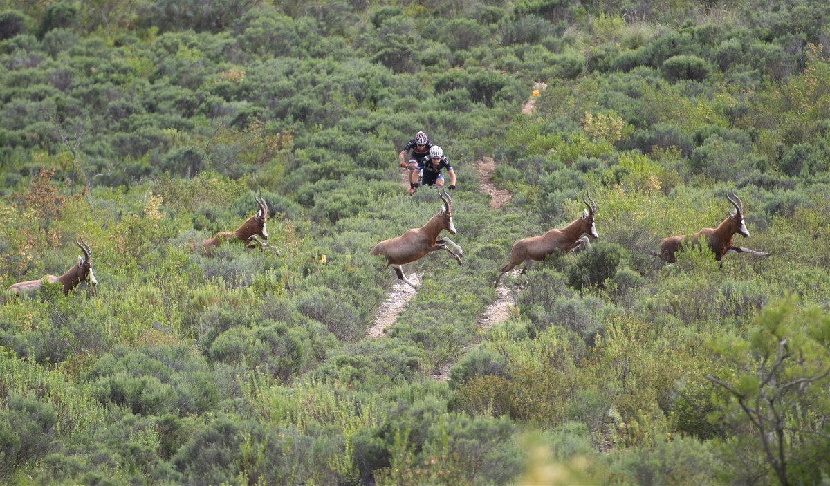 Stage 1 of the 2017 Momentum Health Cape Pioneer Trek, presented by Biogen goes through the Gondwana Private Game Reserve, which is sure to result in a number of wildlife sightings. Photo credit: www.zcmc.co.za